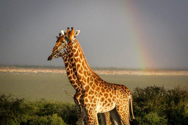Samatian-Island-Lake-Baringo-Kenya-13-of-22-600x400